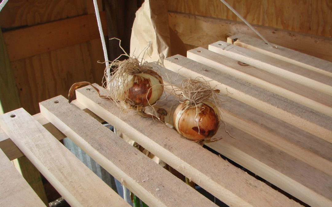 Papa's Onion Drying Rack