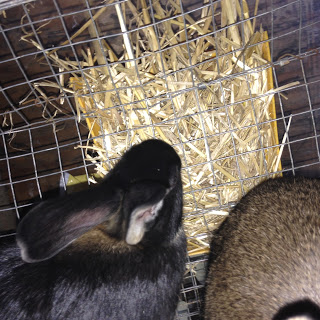 Recycle and Re-Use for Rabbit Hay Feeders